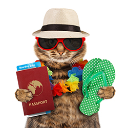 Vacation-Cat