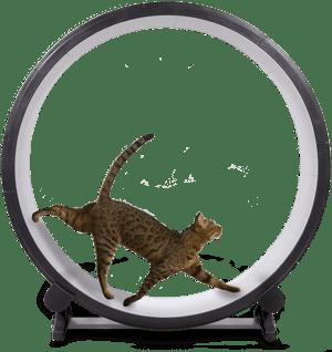 one-fast-cat-wheel