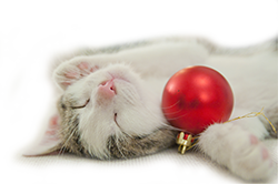 sleeping-cat-holiday