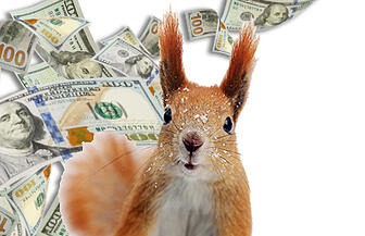 squirrel-money